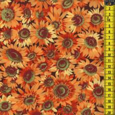 Sunflowers, Sonnenblumen, klein, Orange
