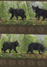 Woodland Bears, Bordüre
