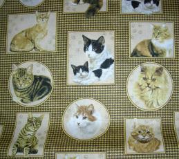 Cats, Bilder, Beige