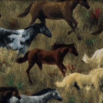 Native American, Pferde
