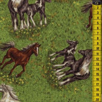 Nature's Corner, Pferde auf der Weide