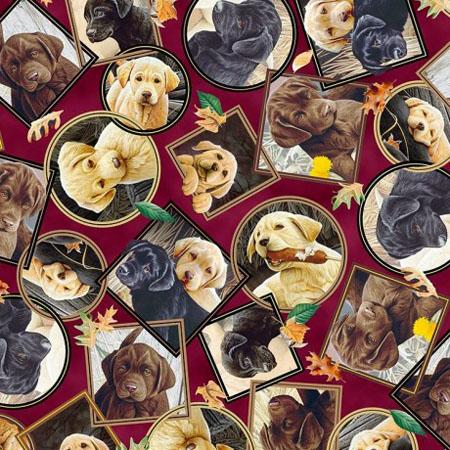 Labrador-Able, Hunde, Bordeaux
